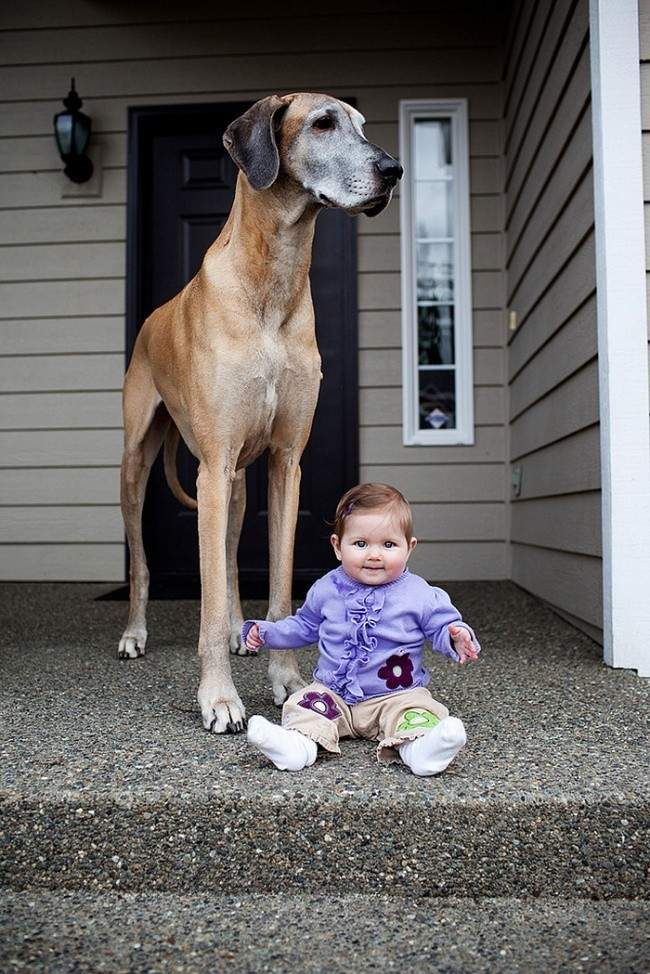 553655-R3L8T8D-650-7172060-R3L8T8D-650-cute-big-dogs-and-babies-35