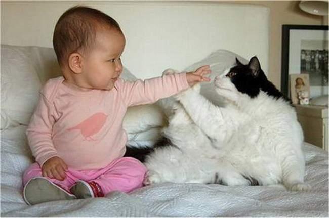 553955-R3L8T8D-650-bambini-gatto