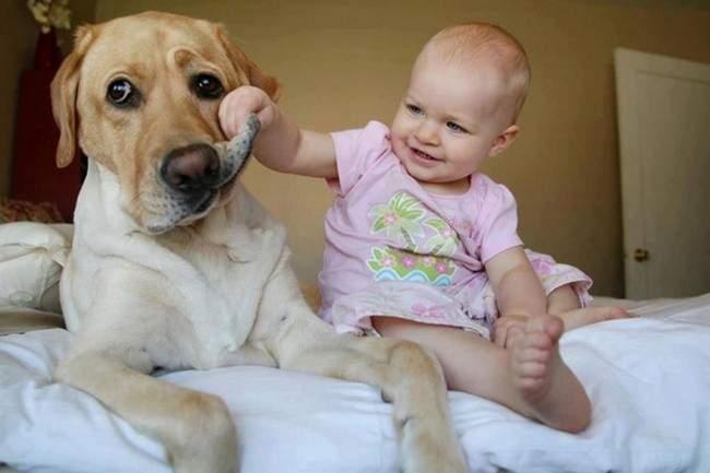 555255-R3L8T8D-650-top-15-des-bebes-avec-leurs-grands-chiens-85846