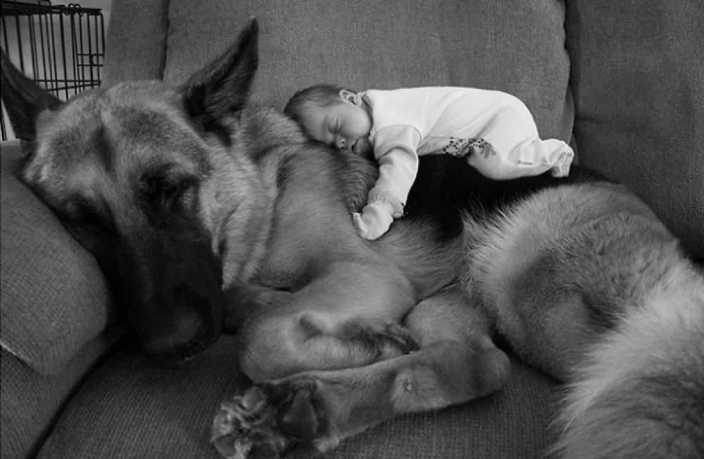 niños-y-mascotas