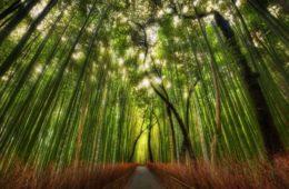 El cuento zen del bambú japonés y su reveladora lección acerca de la perseverancia 6