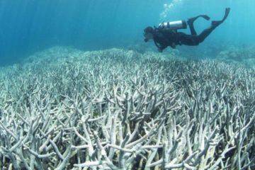 La Gran Barrera de Coral australiana se está volviendo blanca 16