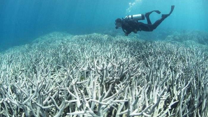 La Gran Barrera de Coral australiana se está volviendo blanca 2