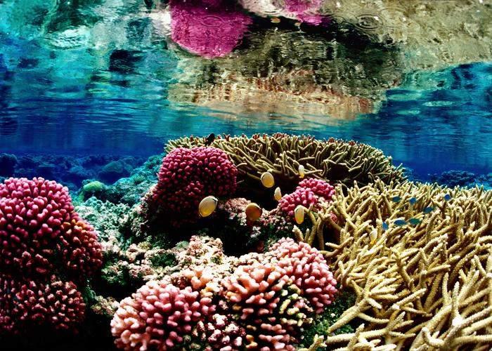 Barrera de Coral en un buen estado de salud. Foto: oceanleadership.org