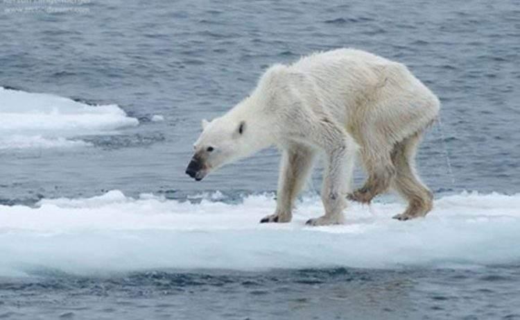 polar-osa-cambio-climático