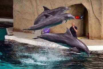 India prohíbe los espectáculos de delfines y los declara personas no humanas 6