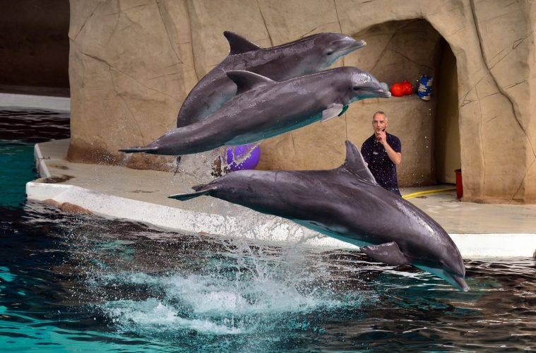 India prohíbe los espectáculos de delfines y los declara personas no humanas 2