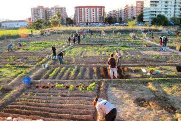 La revolución de las huertas urbanas. Comida gratis y saludable para todos 6