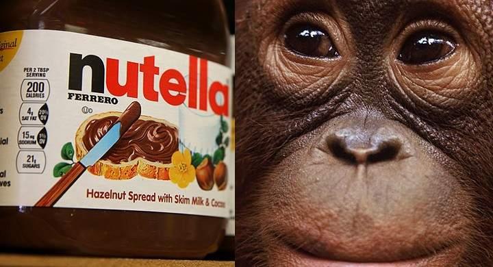 Entre otros el aceite de palma es una grasa vegetal saturada muy utilizada para fabricar galletas y también la crema de cacao Nutella. Fuente: http://ecologismos.com/