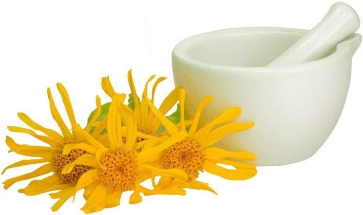 El aceite o crema de árnica lo aplicaremos en caso de torceduras, golpes, y moratones ya que esta planta tiene propiedades antiinflamatorias.