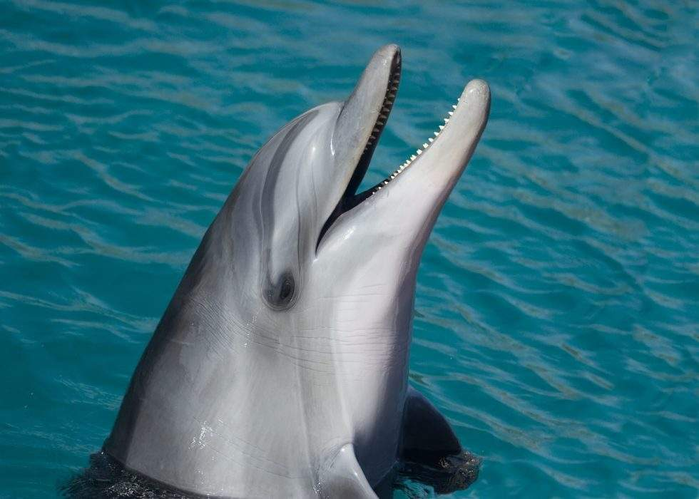 dolphin-sea-marine-smart