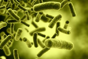Las bacterias que viven en tu intestino podrían explicar tu estado de ánimo 8