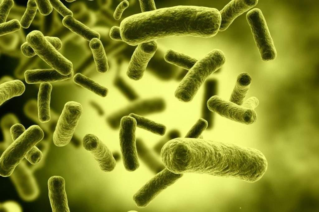 Las bacterias que viven en tu intestino podrían explicar tu estado de ánimo 1