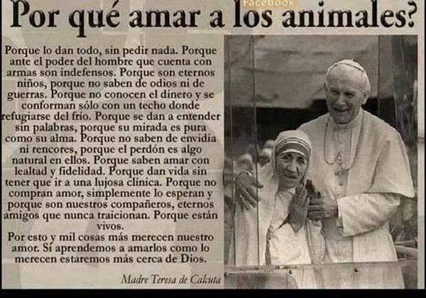 Madre Teresa De Calcuta Por Qué Debemos Amar A Los Animales
