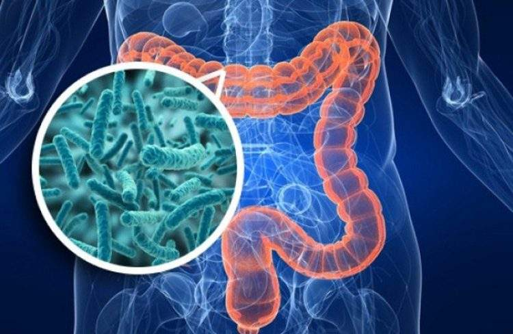 las bacterias del intestino no solo se encargan de metabolizar los alimentos y producir vitaminas.