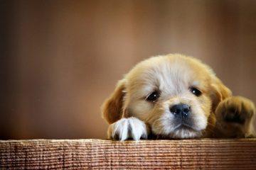 Esto es lo que te diría tu perro si pudiera hablar 8