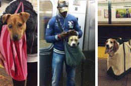 Prohiben subir al metro a los perros que no vayan en su bolsa y los neoyorquinos aceptan el reto 16