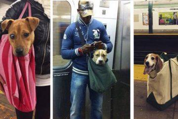 Prohiben subir al metro a los perros que no vayan en su bolsa y los neoyorquinos aceptan el reto 7
