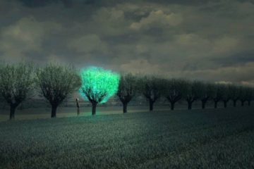 Glowing Plant, el proyecto que busca iluminar las calles con árboles bioluminiscentes 10
