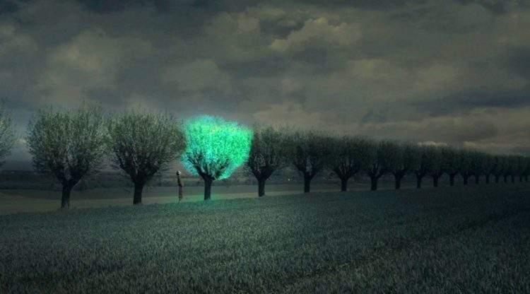 Glowing Plant, el proyecto que busca iluminar las calles con árboles bioluminiscentes 2