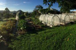 Un proyecto demuestra que con menos de media hectárea de terreno se puede alimentar a 50 familias 14