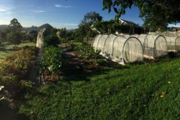 Un proyecto demuestra que con menos de media hectárea de terreno se puede alimentar a 50 familias 9