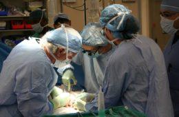 Francia acaba de hacer donante de órganos a todos sus ciudadanos (a menos que te niegues) 6