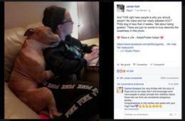 Descubre la historia detrás del abrazo de este entrañable pitbull que está revolucionando Facebook 4