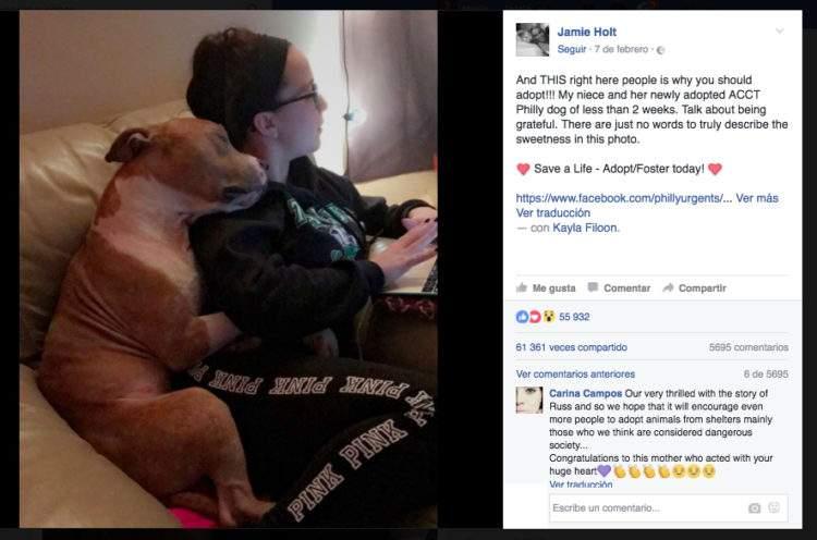 Descubre la historia detrás del abrazo de este entrañable pitbull que está revolucionando Facebook 1