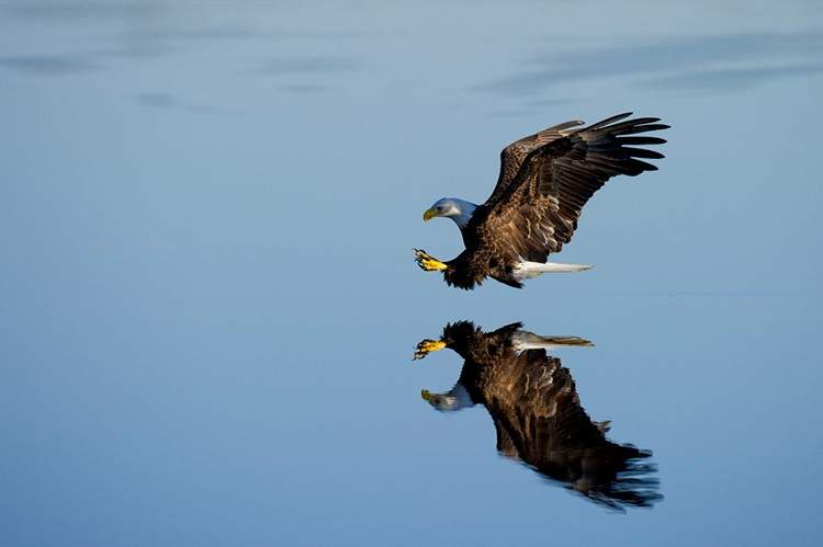 Colocan una cámara en un águila. Admira la elegancia de su vuelo en primera persona 3