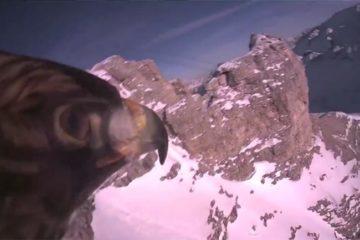 Colocan una cámara en un águila. Admira la elegancia de su vuelo en primera persona 14