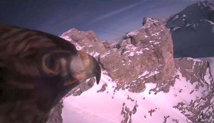 Colocan una cámara en un águila. Admira la elegancia de su vuelo en primera persona 2