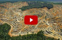 Diez vídeos de Google muestran cómo el ser humano ha cambiado la superficie de la Tierra 20