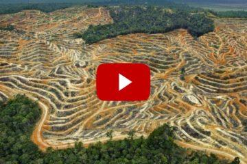 Diez vídeos de Google muestran cómo el ser humano ha cambiado la superficie de la Tierra 14