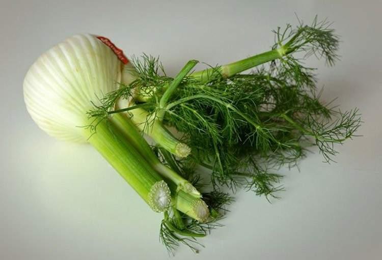 22 plantas medicinales que puedes cultivar en tu casa (aunque sea pequeña) 9