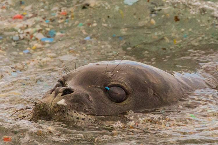 La playa más sucia del mundo ha sido recuperada gracias a la colaboración ciudadana 2