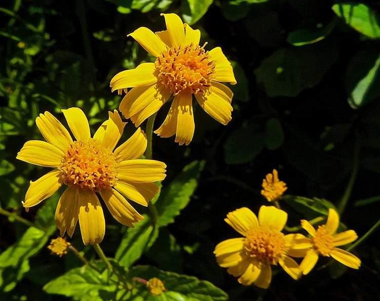 22 plantas medicinales que puedes cultivar en tu casa (aunque sea pequeña) 6