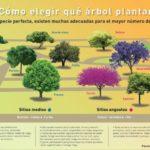 Tabla interactiva para saber elegir qué árbol plantar según donde vives