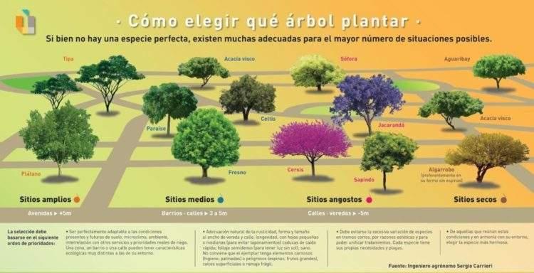 Fuente: www.unidiversidad.com.ar/como-elegir-que-arbol-plantar