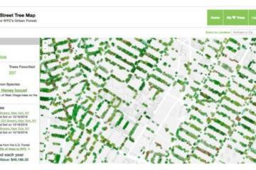 Espectacular web que mapea todos los árboles de Nueva York y calcula el beneficio económico de cada uno 13