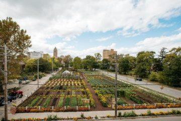Tras la crisis económica, Detroit renació gracias a la agricultura urbana 16
