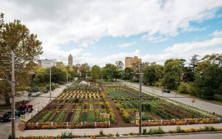 Tras la crisis económica, Detroit renació gracias a la agricultura urbana 2
