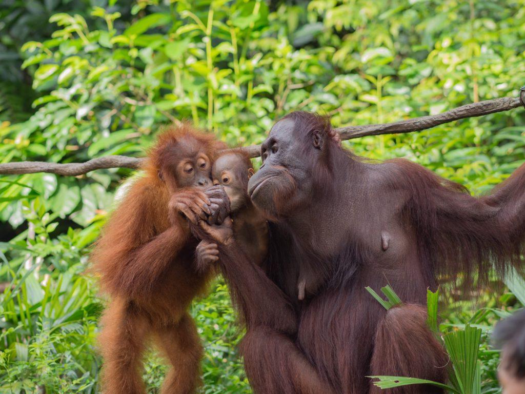 El aceite de palma, un cultivo exterminador que amenaza a los ecosistemas de medio mundo 3