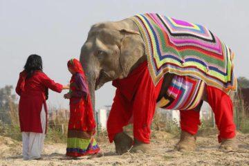 Jerseys gigantes para proteger del frío a los elefantes de un santuario en India 6