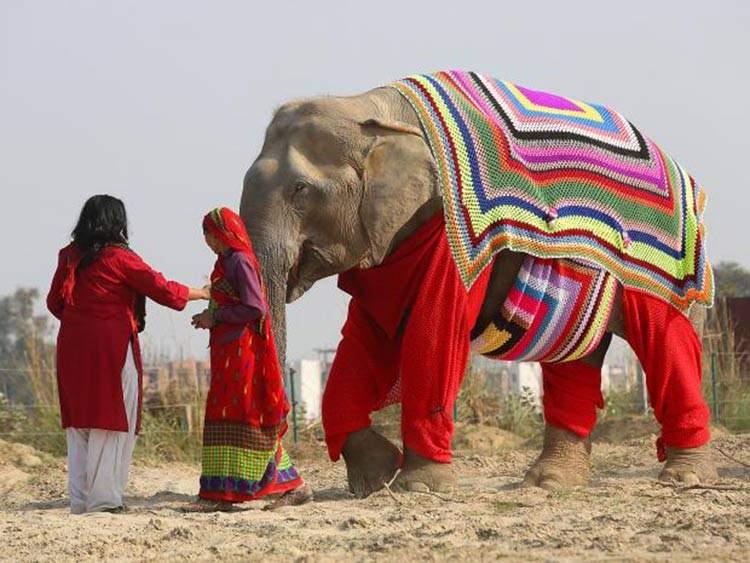 Jerseys gigantes para proteger del frío a los elefantes de un santuario en India 1
