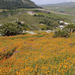 Sicilia le gana la batalla a las multinacionales y recupera su agricultura tradicional