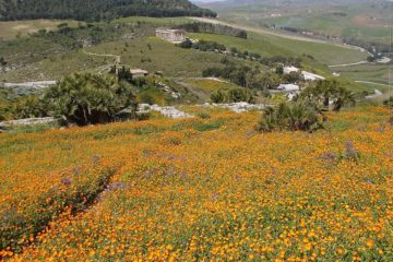 Sicilia le gana la batalla a las multinacionales y recupera su agricultura tradicional 4