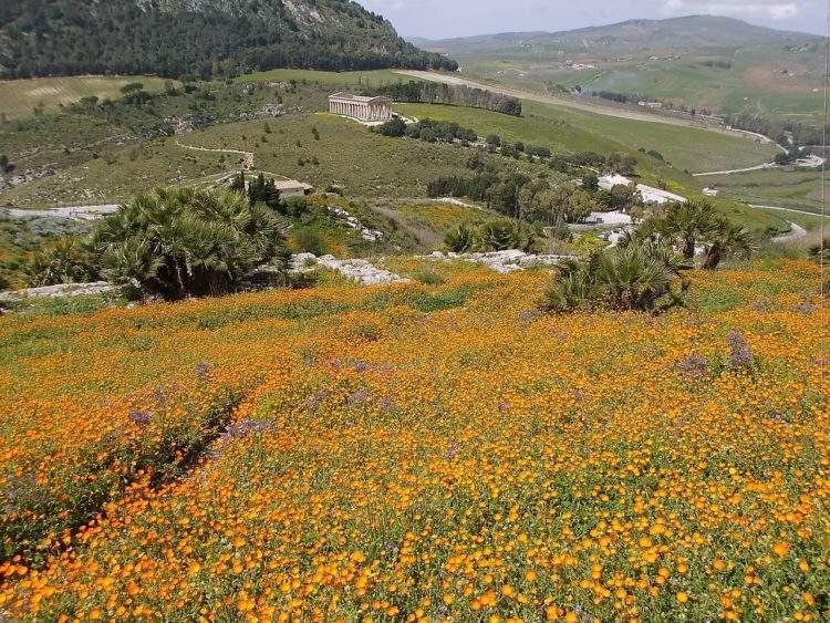 Sicilia le gana la batalla a las multinacionales y recupera su agricultura tradicional 2