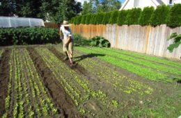 Agricultura urbana o cómo comenzar un negocio agrícola en el patio de casa 12