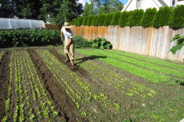Agricultura urbana o cómo comenzar un negocio agrícola en el patio de casa 15